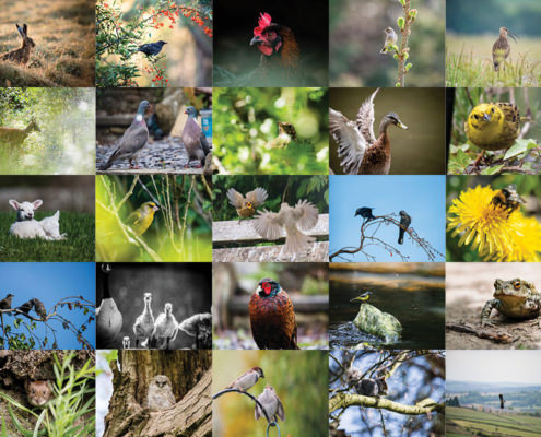 Roundup of wildlife photos