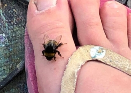 Bee on my toe