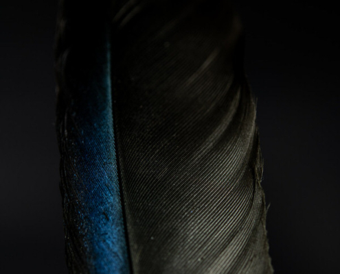 Black Bird Feather