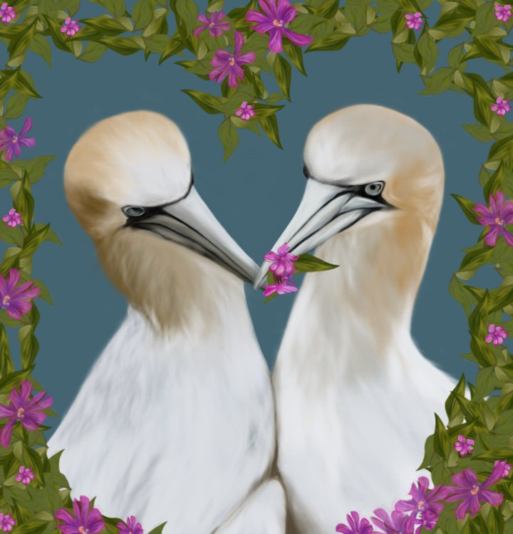 gannets painting