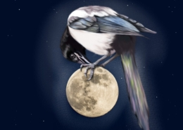 Magpie on the Moon